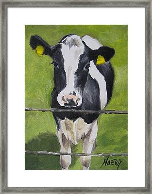 A Heifer Framed Print