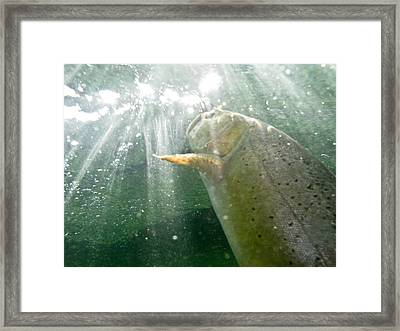 A Snake River Fine Spotted Cutthroat Framed Print