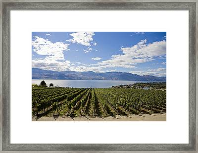 A Vineyard In Canada On A Summer Day Framed Print by Taylor S. Kennedy