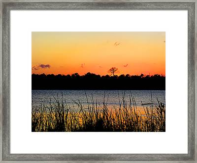 Above The Rest Framed Print by Grace Dillon