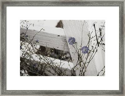 Against The Fence Framed Print by Rebecca Cozart