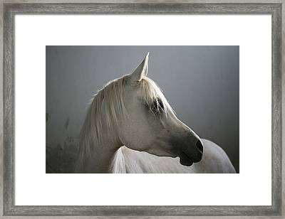 Arabian Horse Framed Print by Photo by Eman Jamal