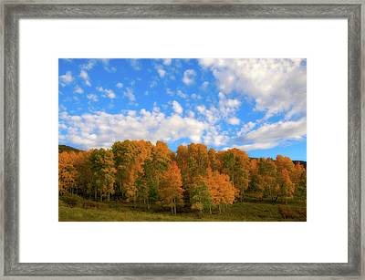 Framed Print featuring the photograph Aspens by Steve Stuller
