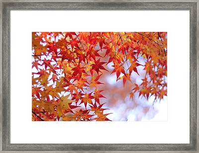 Autumn Leaves Framed Print by Myu-myu