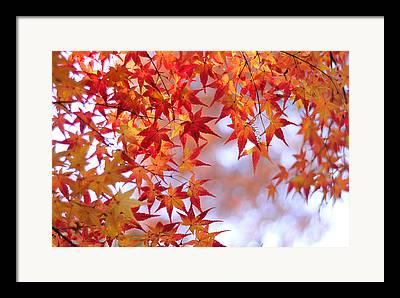 Japanese Fall Foliage Framed Prints
