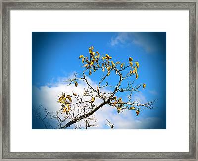 Autumn's Here Framed Print by Milena Ilieva