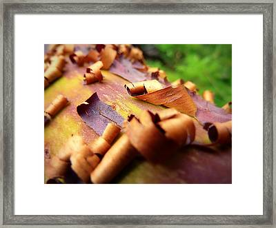 Barking Up The Madrone Tree Framed Print by Cindy Wright