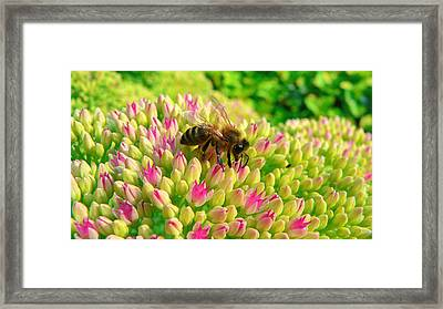 Framed Print featuring the photograph Bee On Flower by Larry Keahey