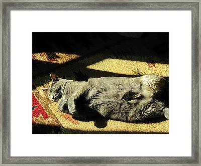 Bella Napping Framed Print