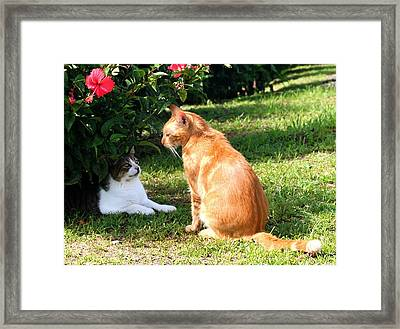 Framed Print featuring the photograph Best Buddies by The Art of Alice Terrill