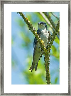 Framed Print featuring the photograph Bird In Tree by Rod Wiens