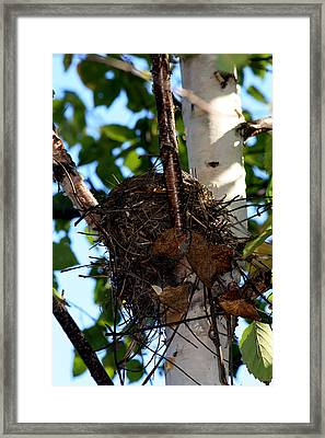 Bird Nest In Birch Tree Framed Print by Marjorie Imbeau
