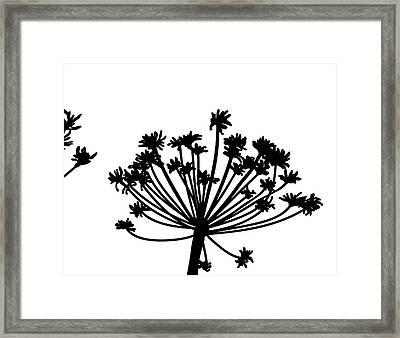 Black And White Dandelion Part 2 Framed Print by Nomi Elboim