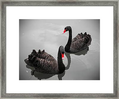 Black Swan Framed Print by Bert Kaufmann Photography