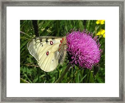 Blancarosa Framed Print by Jean-Michel Ammon