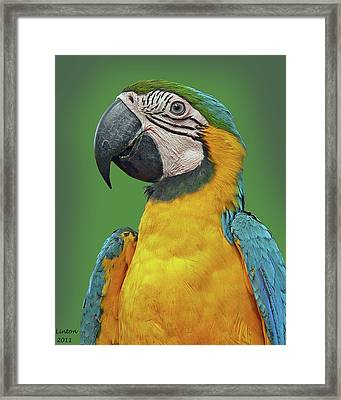 Blue-and-yellow Macaw Framed Print by Larry Linton