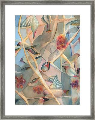 Bohemian Waxwings Framed Print by Anne Havard