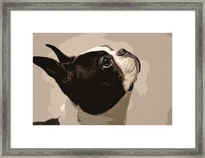 Boston Terrier Framed Print by Donna G Smith