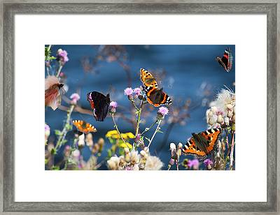 Butterflies Sitting On Flower Framed Print by www.WM ArtPhoto.se