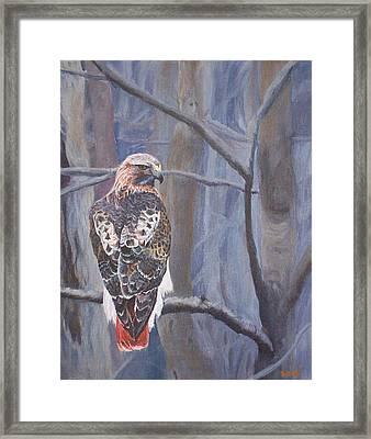 Can't See The Forest For The Trees Framed Print by Bill Werle