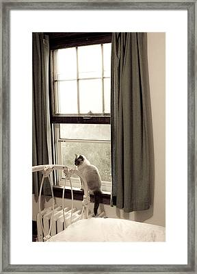 Cat At Home Framed Print