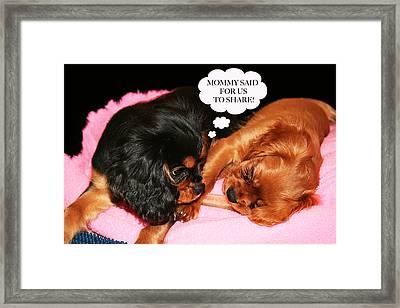 Cavalier King Charles Spaniel Let's Share Framed Print by Daphne Sampson