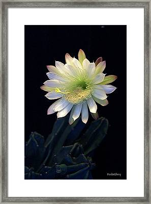 Framed Print featuring the photograph Cereus Peruvianus by Dodie Ulery