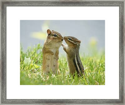 Chipmunks In Grasses Framed Print