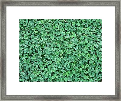 Clover Field Framed Print