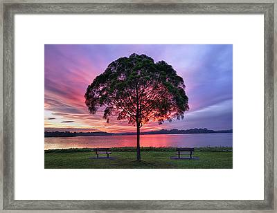 Colorful Light Seen Behind Tree Framed Print