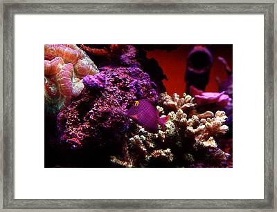 Framed Print featuring the photograph Colors Of Underwater Life by Clayton Bruster