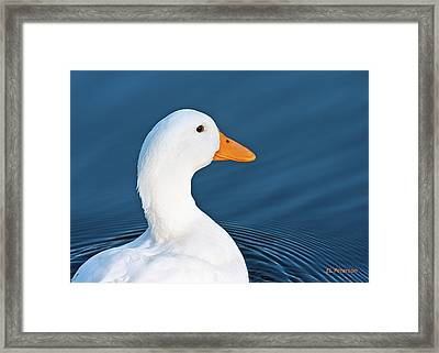 Come Swim With Me Framed Print by Edward Peterson