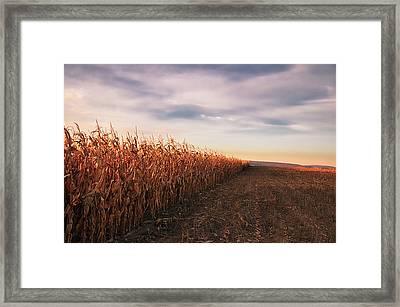 Cornfield Framed Print by Michael Kohaupt