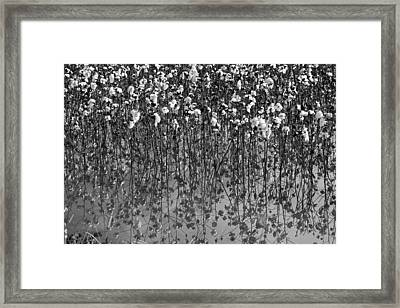 Cotton Abstract In Black And White Framed Print