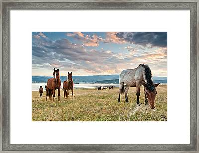 Curious Horses Framed Print by Evgeni Dinev
