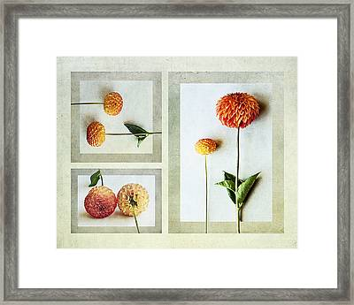 Framed Print featuring the photograph Dahlia Trip by Kevin Bergen