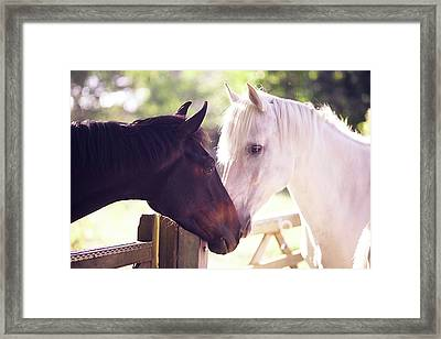 Dark Bay And Gray Horse Sniffing Each Other Framed Print