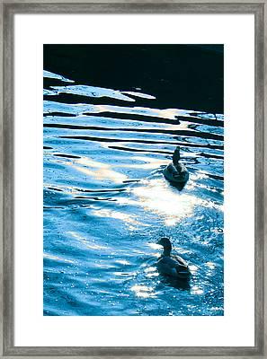 Ducks At Twilight Framed Print by Ginny Gaura