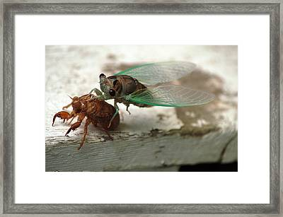 Framed Print featuring the photograph Escape by Wanda Brandon