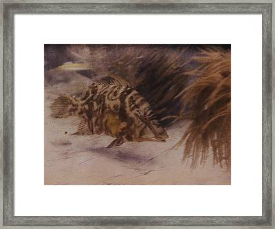 Example Of First Underwater Photography Framed Print by W. H. Longley And Charles Martin