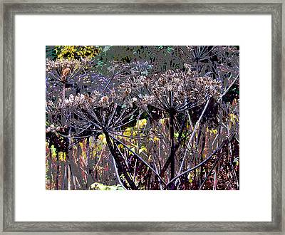 Fall Cow Parsnips Framed Print by Anne Havard