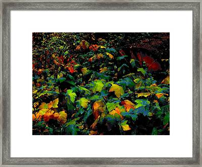 Fall Thimbleberry Framed Print by Anne Havard