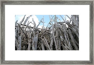 Fallen Palm Framed Print by Mandy Shupp
