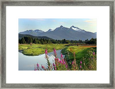 Fireweed Near River. Framed Print by Dagny Willis