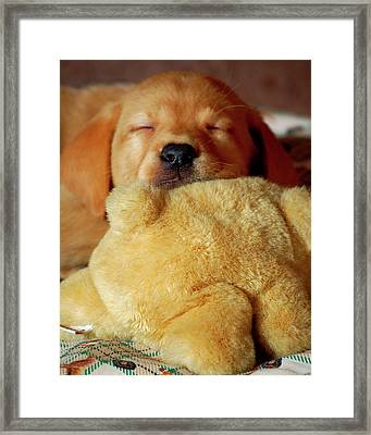 First Puppy Snooze Framed Print