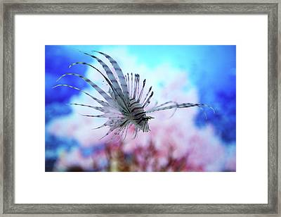 Fish In Aquarium Framed Print