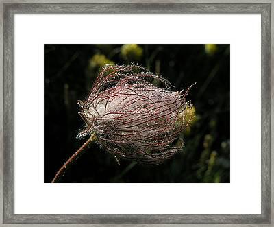 Fleur Coeur Framed Print by Jean-Michel Ammon