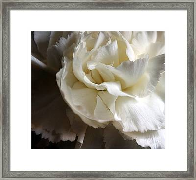 Framed Print featuring the photograph Flower Beauty by Deniece Platt