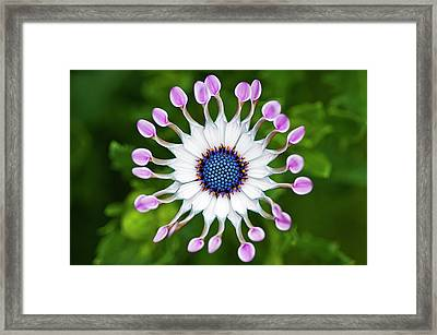 Flower Framed Print by Simon Anderson