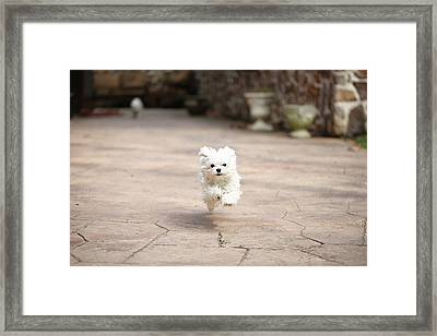 Flying Dog Framed Print by moments caught Photography